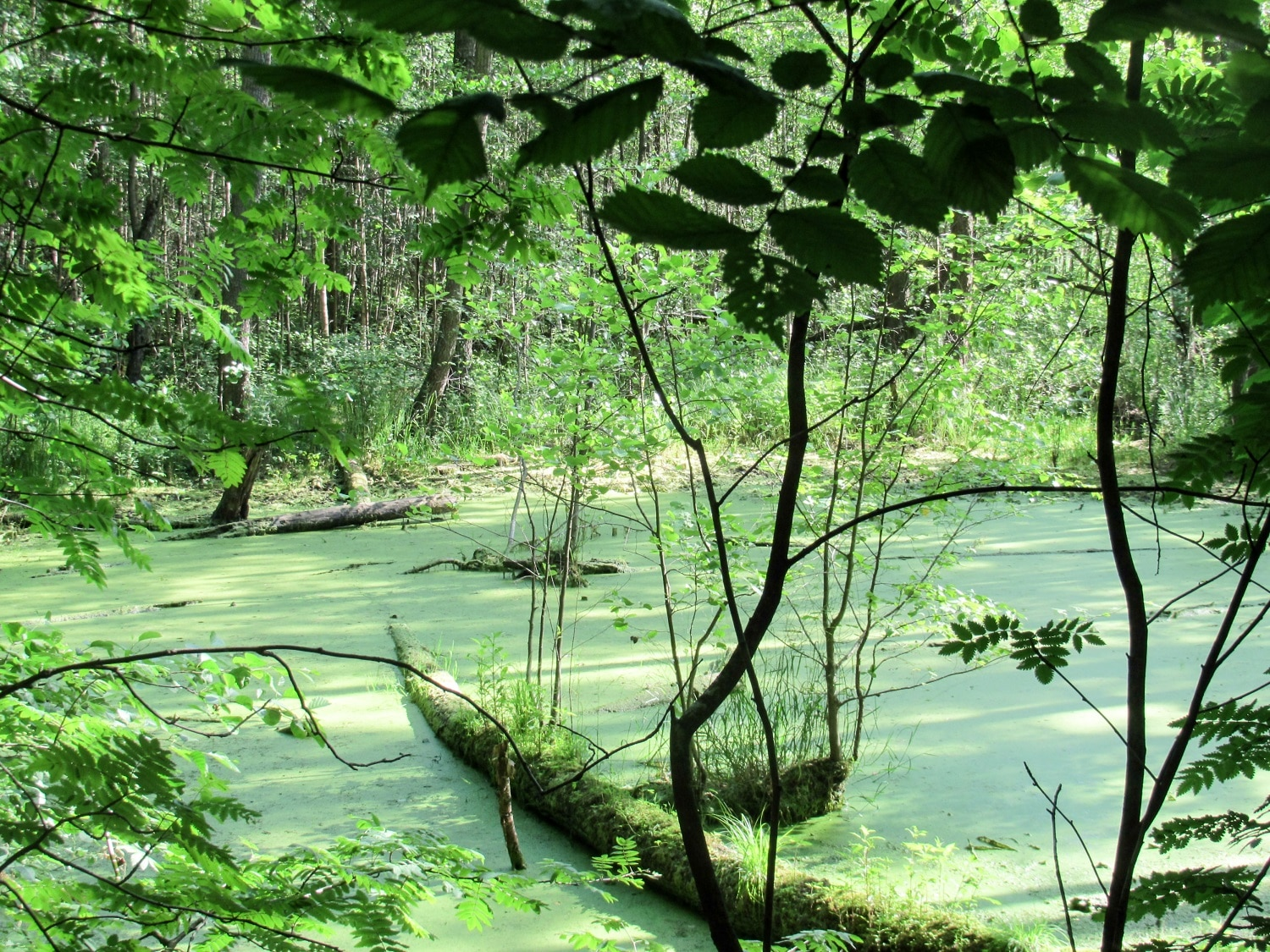 Environmental Conservation and Biodiversity