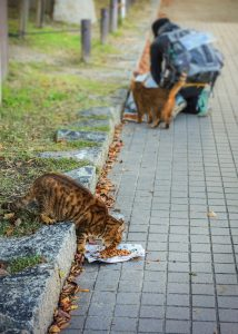 feeding cats on the street