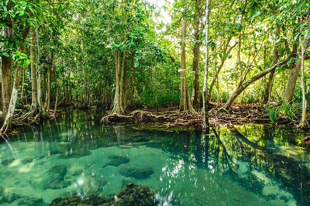 Joining Forces Environmentalists Work to Save Mangrove ...  Joining Forces ...